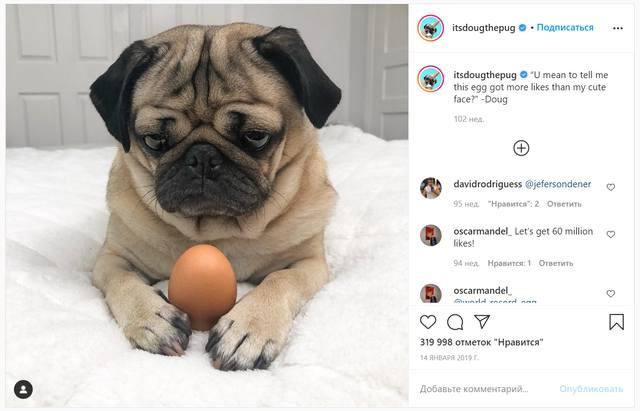 Мопс с куриным яйцом на Instagram