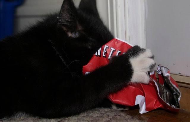 Кот уничтожает сервис Netflix