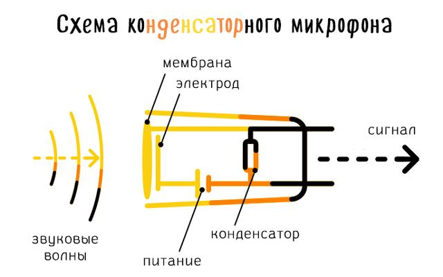 Схема базовой конструкции конденсаторного микрофона