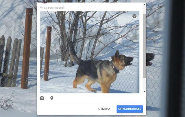 Публикация фотографии в личной ленте Google Plus