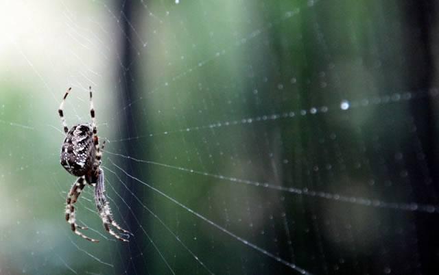 Паук, ожидающий жерту в сетевой паутине