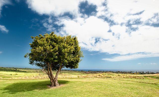 Пример красивой пейзажной фотографии одинокого дерева