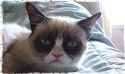 Сердитый кот – пример вирусного видео на YouTube